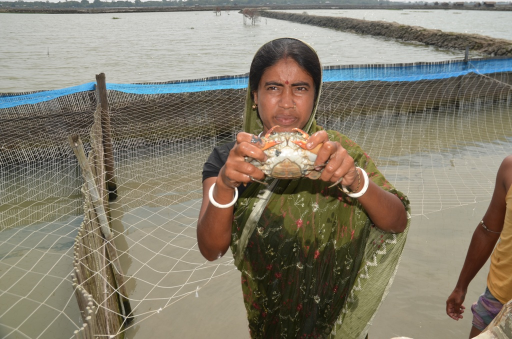 Archana Rani Mondal is a crab farmer in southwestern Bangladesh. Left with no livestock or poultry after Cyclone Aila, Mondal shifted to crab farming and now leads a producers' group in her region (Photo: Kundan Pandey)