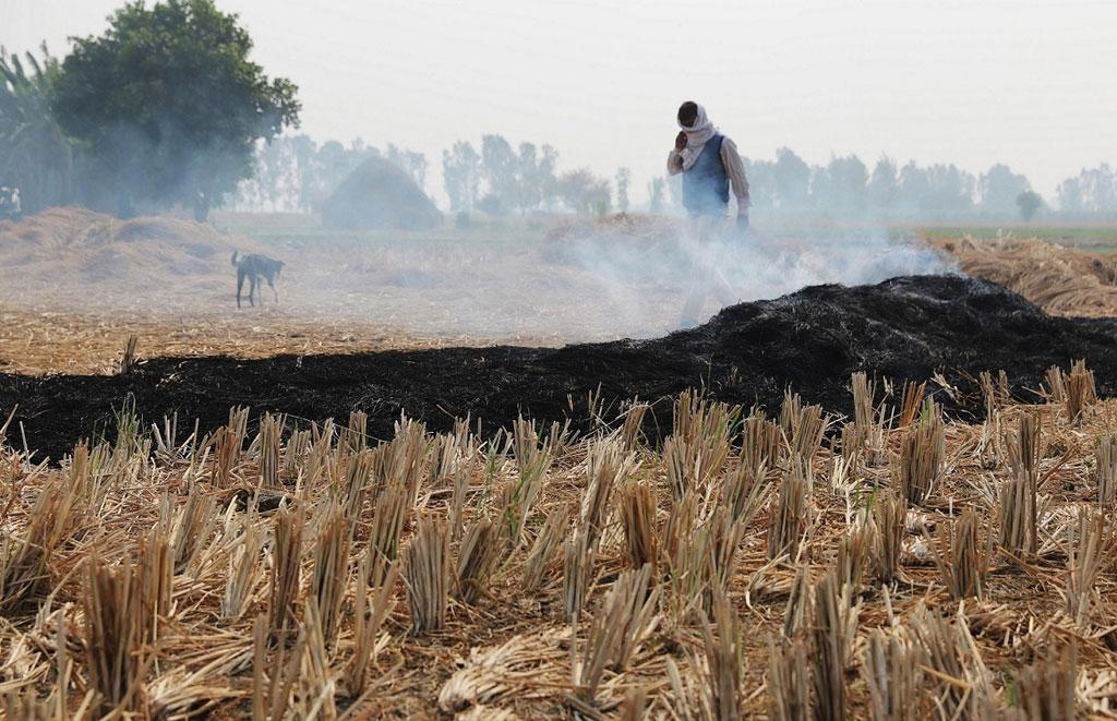 Crop Burning: Punjab and Haryana's killer fields