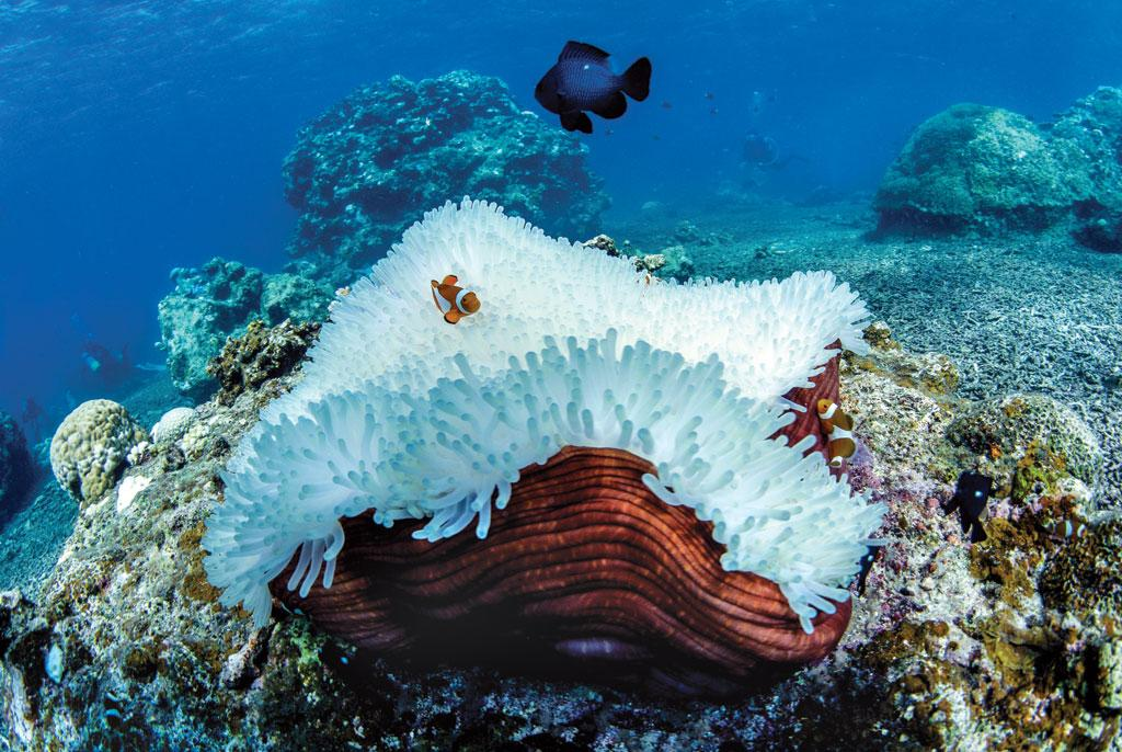 Coral bleaching at Japan's Okinawa island in September 2016