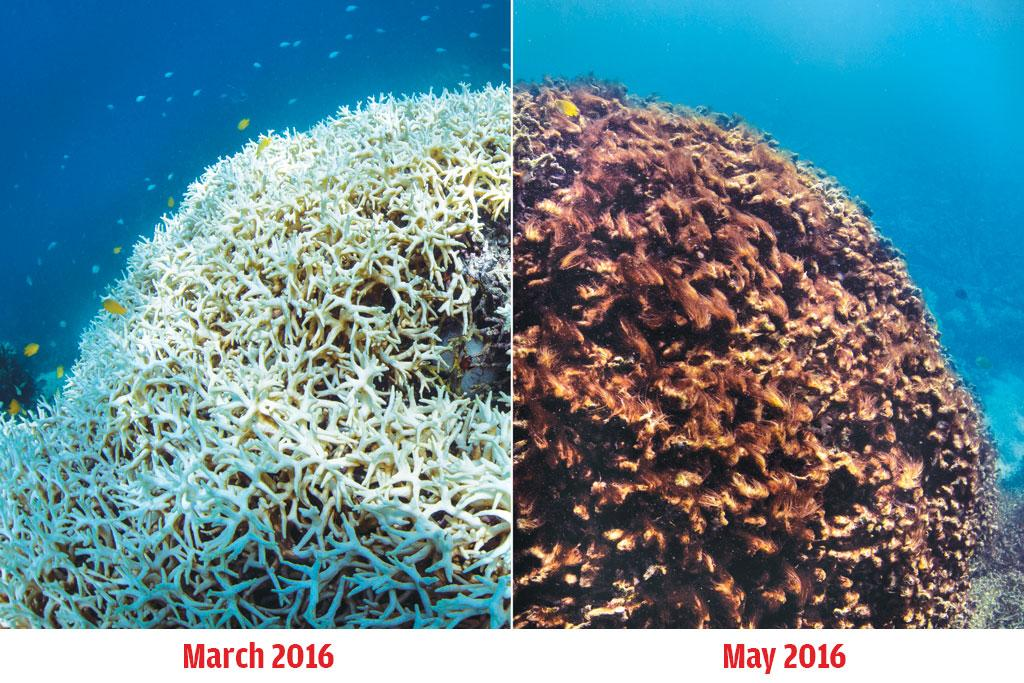 The image on the left