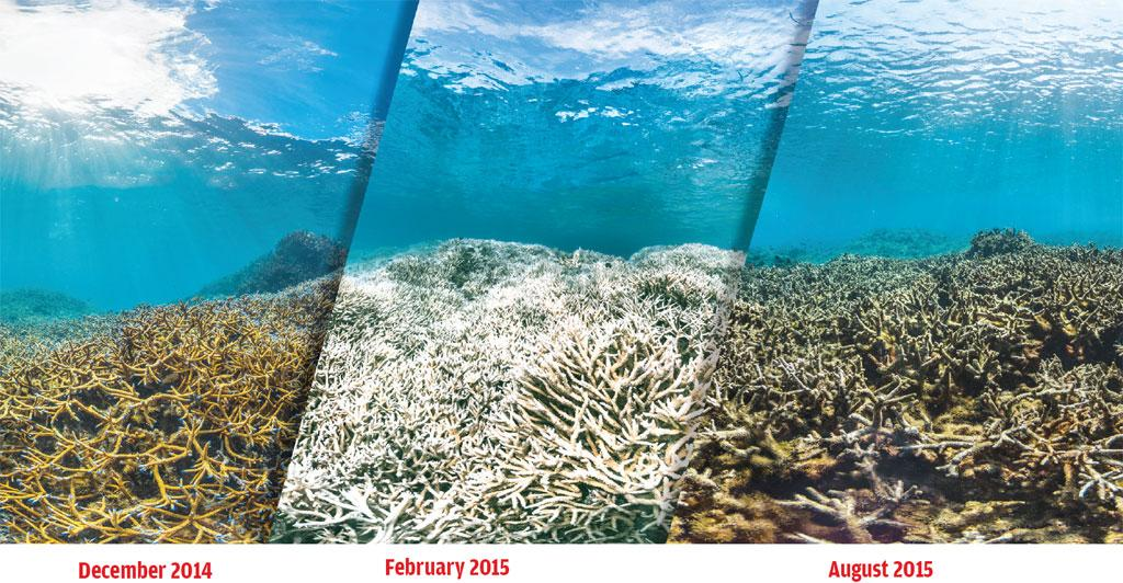 How a healthy reef (left) in American Samoa bleached (centre) and eventually died during the current bleaching event