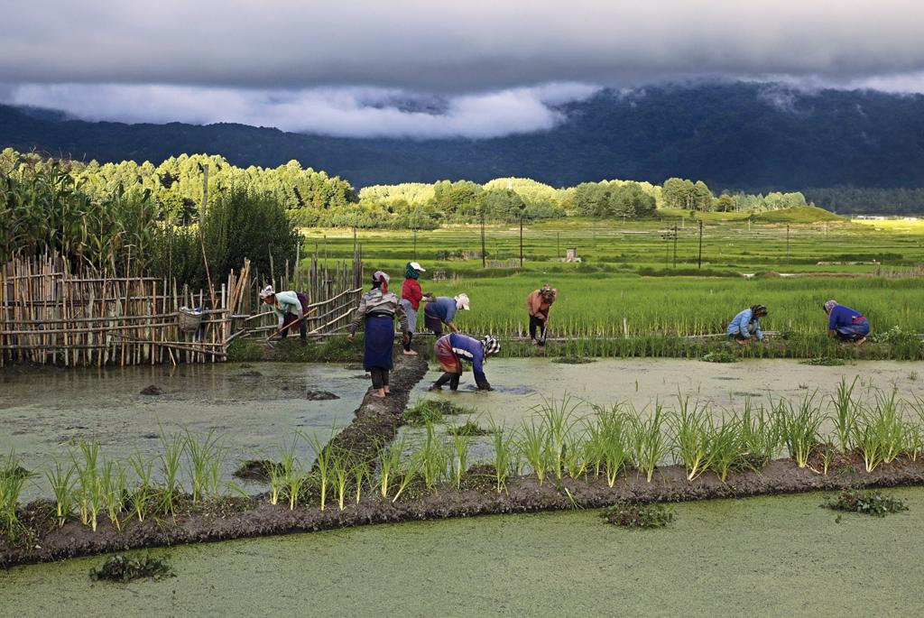 Terraced fields are landscaped on a slight