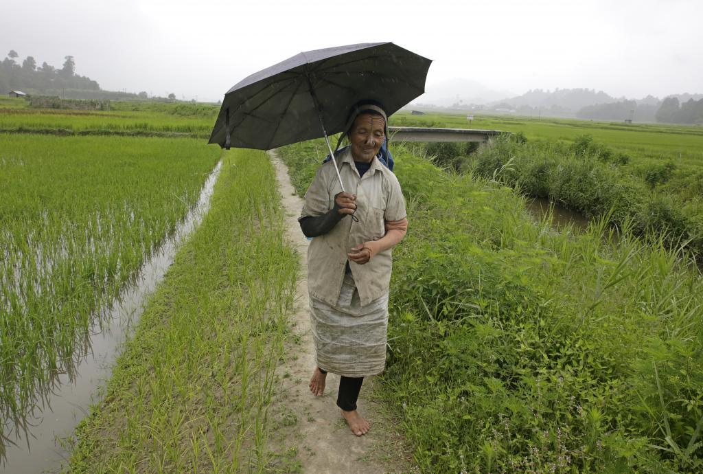 An Apatani woman walks in the lush green paddy fields. The Apatanis are well-known for their wet rice cultivation. Credit: Vikas Choudhary