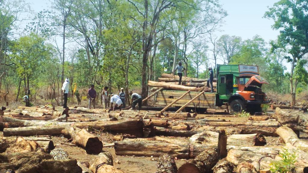Felling activities by Forest Development Corporation of Maharashtra Ltd in Brahmapuri forest division (Photo: Shruti Agarwal)