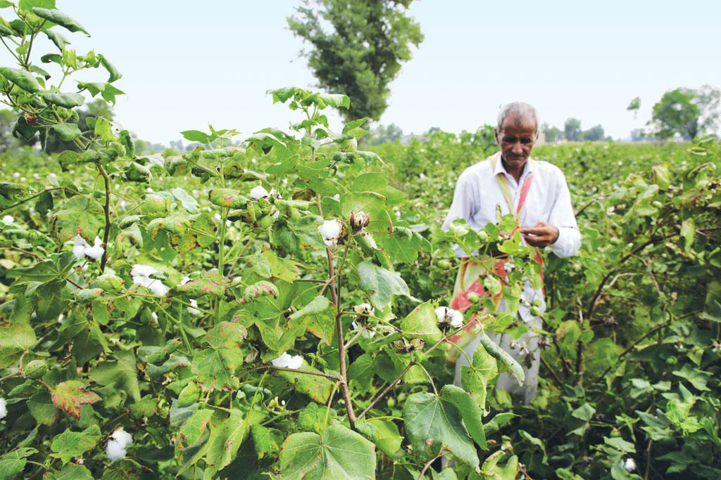 Sultan, a