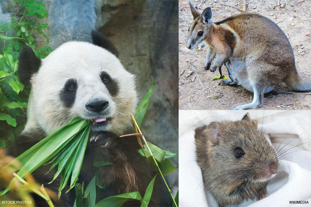(Clockwise from