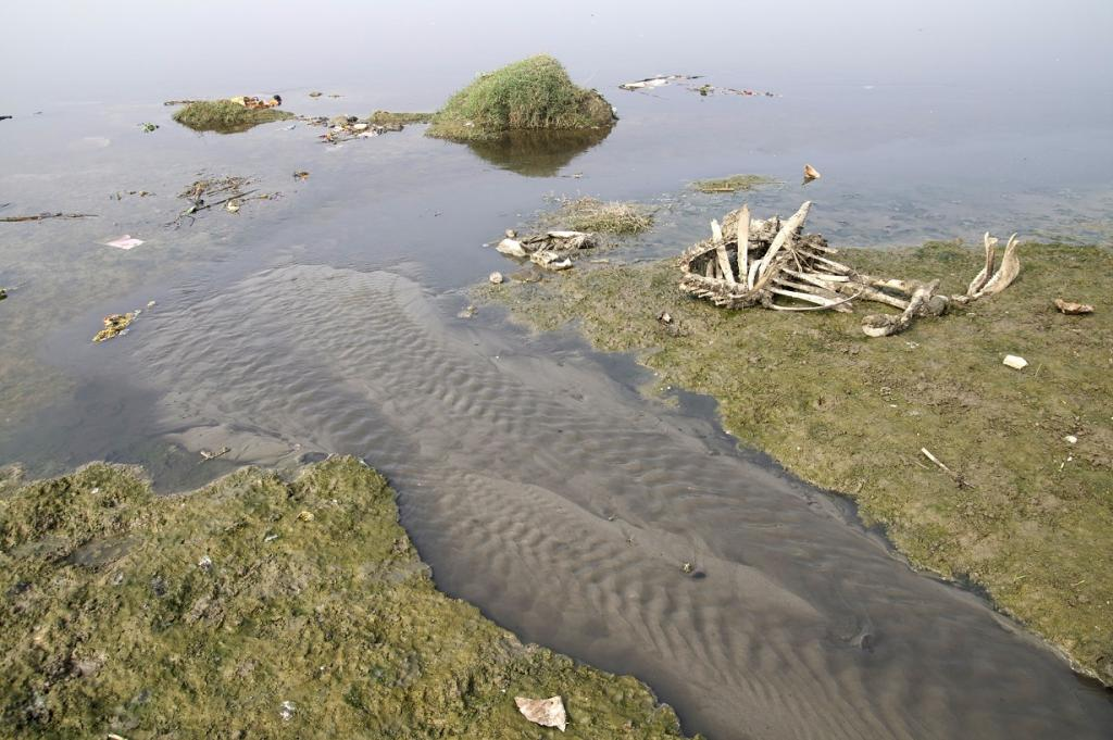 "Efforts to address the Yamuna's plight are critical because it has been classified as ""ecologically dead"". Credit: Ajay Tallam / Flicker"