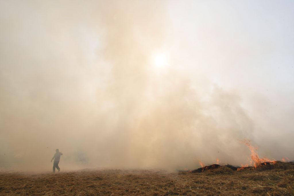 Farmers in Punjab and Haryana burn 90-95 per cent of the 32 million tonnes of paddy stubble left in the fields (Photo: Vikas Choudhary)
