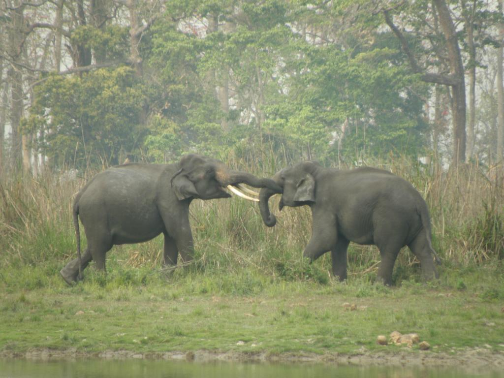 Two elephants in Assam's Kaziranga National Park (Credit: CSE)