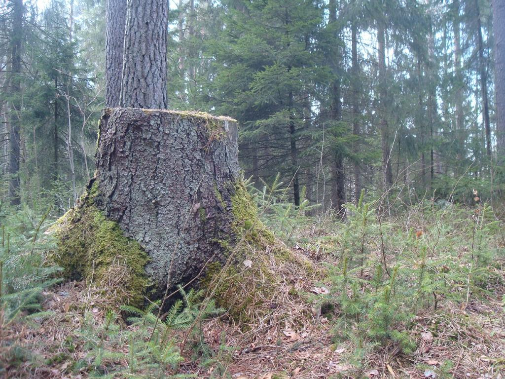 There's no law to make it obligatory for European bioenergy plants to prove that their wood products are sustainably sourced. Credit: David J/ Flicker