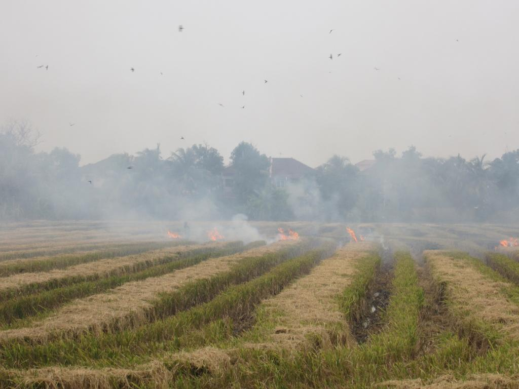 The CSE has long been advocating stepping up of inter-state coordination to address smoke plumes from farm fires in Punjab and Haryana. Credit: Marufish / Flicker