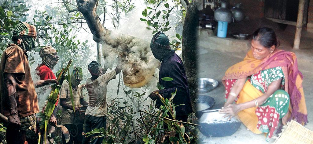 The Forest Department buys honey from forest communities for Rs 115 per kg, which is much lower than the market price of about Rs 300 per kg; (Right) Arati Haldar, whose husband was killed by a tiger, struggles for survival (Photo: Muhammad Mostafigur Rahman)