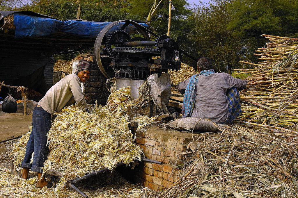 Experts feel that due to upcoming election, sugar mills had timely started its crushing operation. Credit: Giridhar Appaji Nag/ Flicker