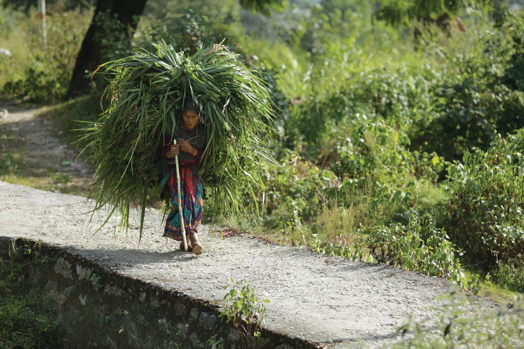 मंडल घाटी की चेता देवी को पहले सुबह 4 बजे उठकर पहाड़ के ढलान पर उगी घास लाने के लिए जाना पड़ता था और लौटने में दोपहर हो जाया करती थी। अब ग्रामीणों ने गांव के खाली पड़ी जमीन पर जंगल उगा लिया है, इसलिए चेता देवी को अब चारे के लिए दूर नहीं जाना पड़ता।