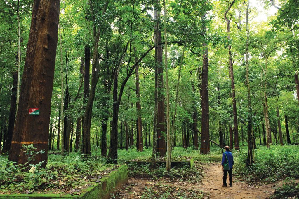 Maharashtra has around 0.3 million hectare of
