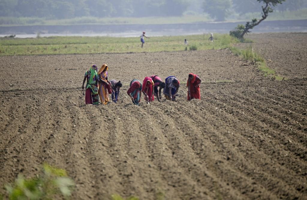 Women sow maize in Khagaria in late October. Credit: Vikas Choudhary