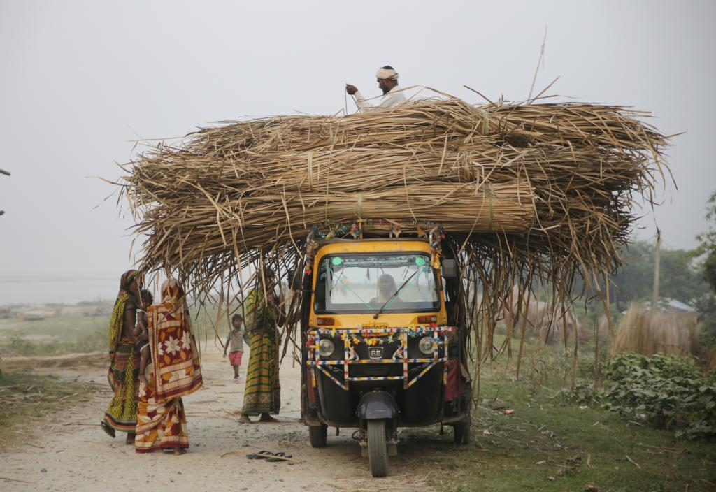 Dried pater, or reed, is loaded on a vehicle for transportation. Pater growing along the river is used for making thatches and mats. Credit: Vikas Choudhary