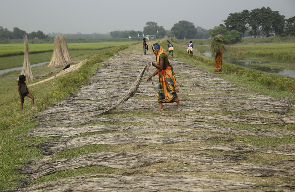 Women dry jute fibre on the embankment. In Supaul, jute is grown extensively in waterlogged areas and ponds along the embankments.  Credit: Vikas Choudhary
