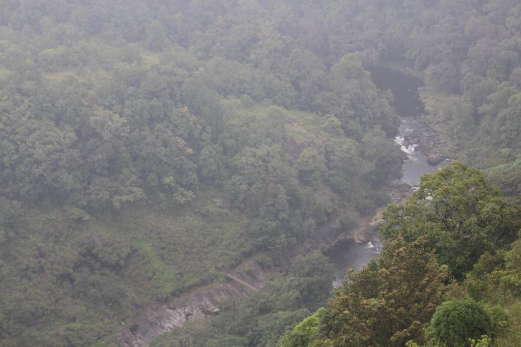 The Kunthipuzha river flows through a dense foliage of trees. The river is named after Kunti, the mother of Pandavas. The hydopower project planned on this river in the 80s never saw the light of day, thanks to  the environmental movement opposing the disaster. Silent Valley has remained untouched since then Credit: Jemima Rohekar