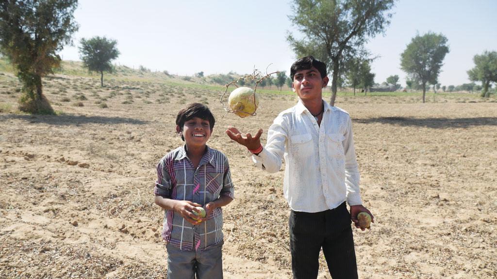 Shaitan (left) and Moti play with wild tinda fruits at a farm in Godaro ki Dhani in Bikaner's Bhelu village
