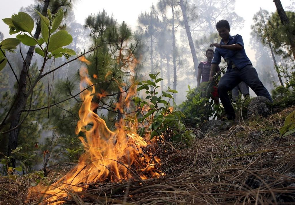 There are also speculations that uncontrolled growth of lantana and rubbing of dry bamboo caused the fire. Credit: Vikas Chaudhury / CSE