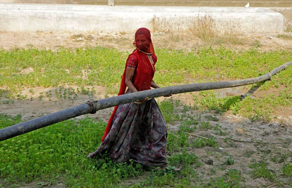 Working alone in her field, a woman positions a pipe to water crops via drip irrigation in Rajasthan (Credit: Vikas Choudhary/CSE)