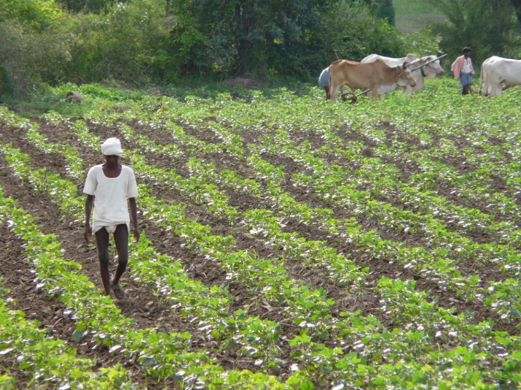 Of the total farm loan, 61 per cent is crop loan and rest is term loan.Credit: Jankie / Flicker