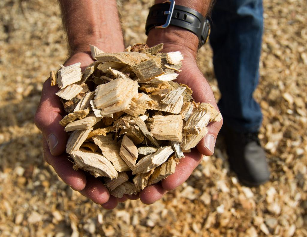 Scientists used various types of biomass, including pieces of wood, paper and leaves to produce clean hydrogen. Credit: Oregon Forest Dept / Flicker