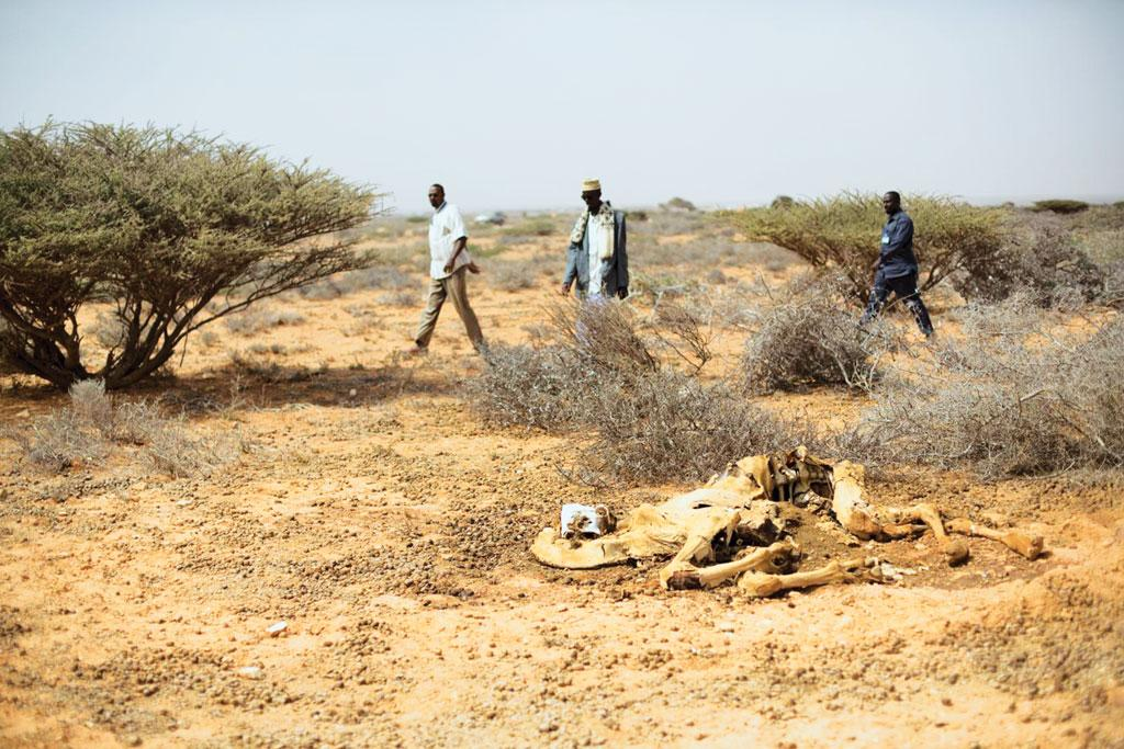Somali men walk past a dead camel at a camp for internally-displaced people at Uusgure village. These people are pastorals, who moved to camps after they lost their livelihood due to drought  (Credit: FAO/Karel Prinsloo)