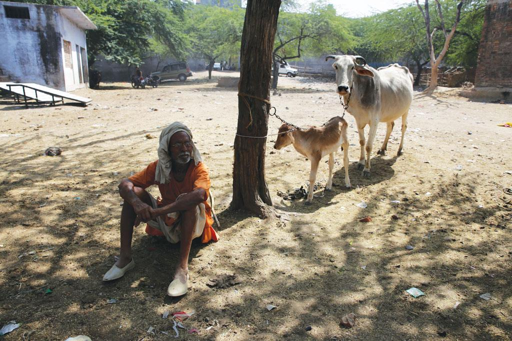 A 70-year-old marginal farmer in Banda district is ready to sell his cow and a calf for a mere Rs 2,500. He needs the cash, but there are no buyers at the animal market following the ban of illegal slaughterhouses