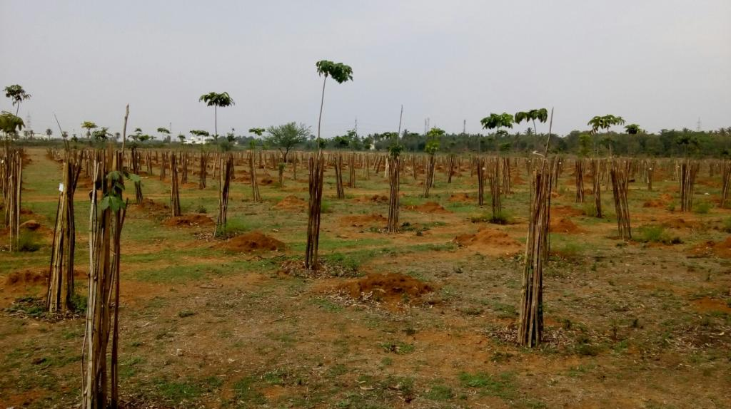 Indigenous species like tamarind, jackfruit, neem and mahogany are planted along the course of the river. Credit: Subhojit Goswami / DTE