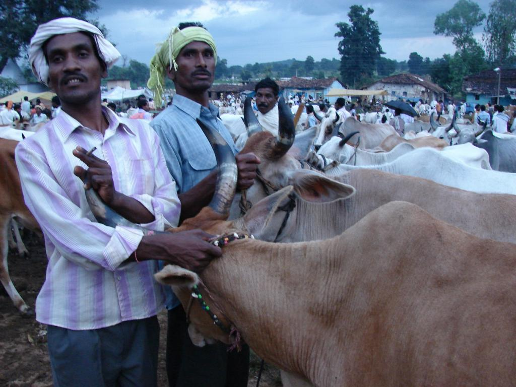 For farmers, animals are important economic assets. Credit: Kumar Sambhav Shrivastava / CSE