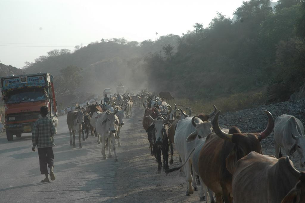 Livestock has assumed the most important role in providing employment and income generating opportunities. Credit: Samrat Mukherjee / CSE