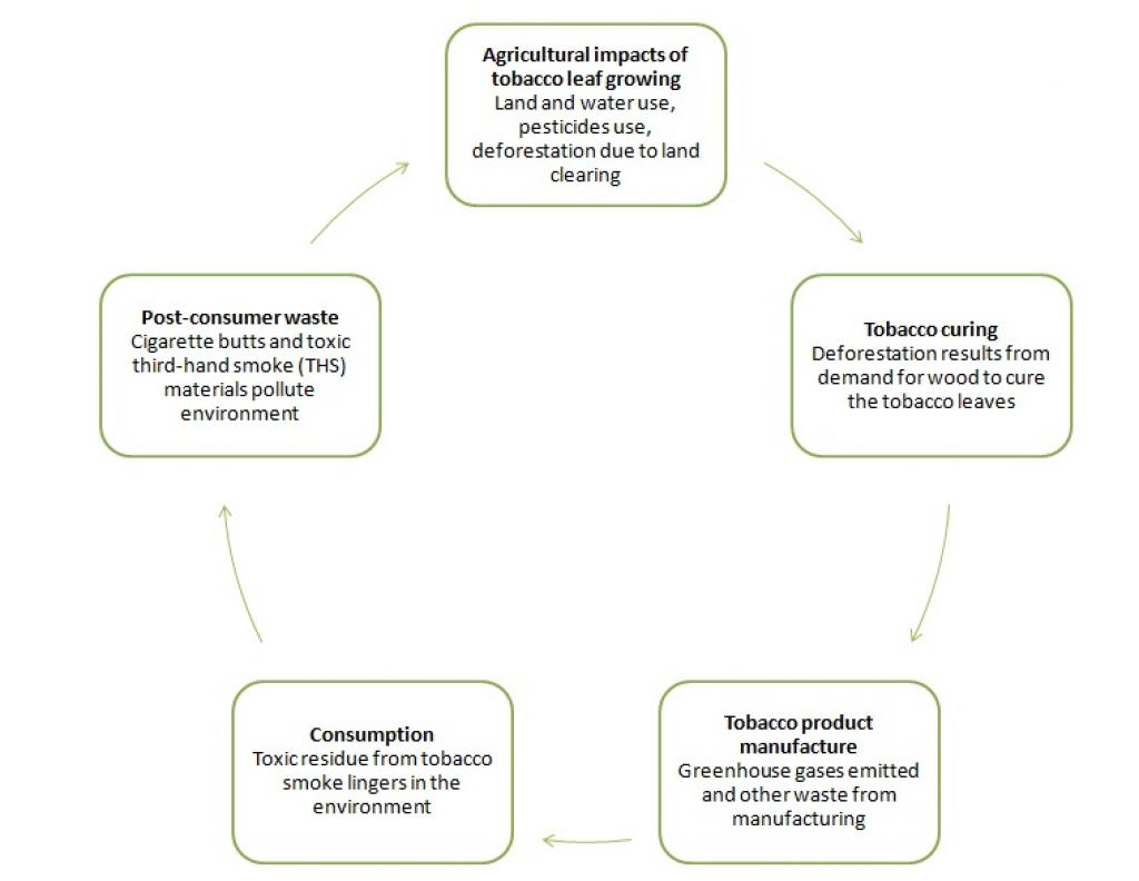 Life cycle of tobacco – from cultivation to consumer waste. Credit: WHO
