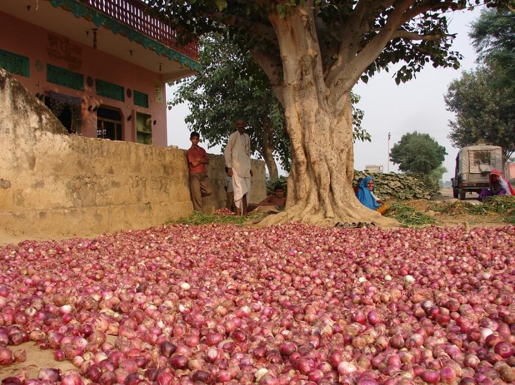 Average price of onion dropped by 21 per cent between July 2016 and April 2017. Credit: Kumar Sambhav Shrivastava / CSE