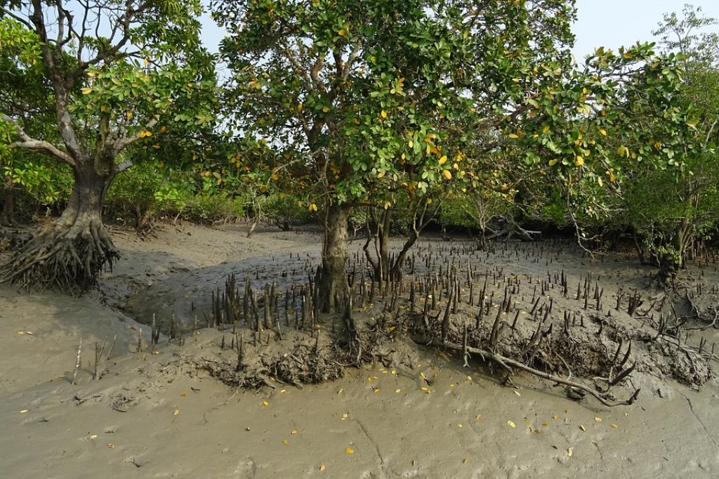 Researchers isolated this new bacterium from Lothian island in the Sundarbans forest. Credit: Maxpixel