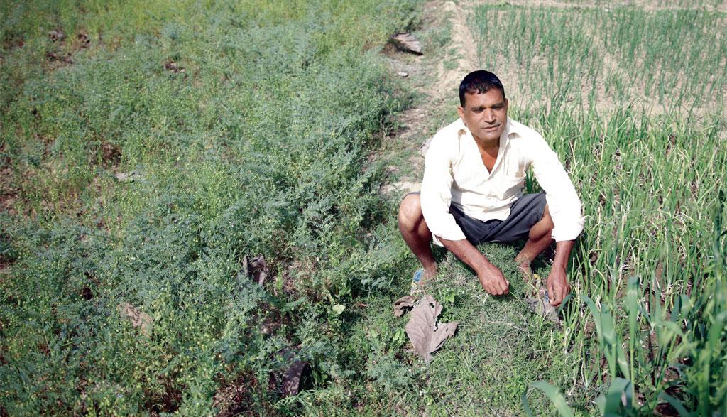 Farmers in Gorakhpur are growing a greater number of crops on the same piece of land, thus increasing cropping intensity