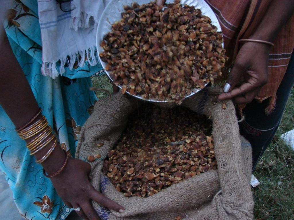 Revised guidelines heavily cut down the MSP for important MFPs, including mahua seeds. Credit: Kumar Sambhav Shrivastava / CSE