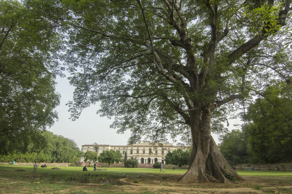 Located at the Teen Murti Bhavan, this Semal or Bobax ceiba tree has provided shade to visitors for decades (Credit: Adithyan P C/CSE)