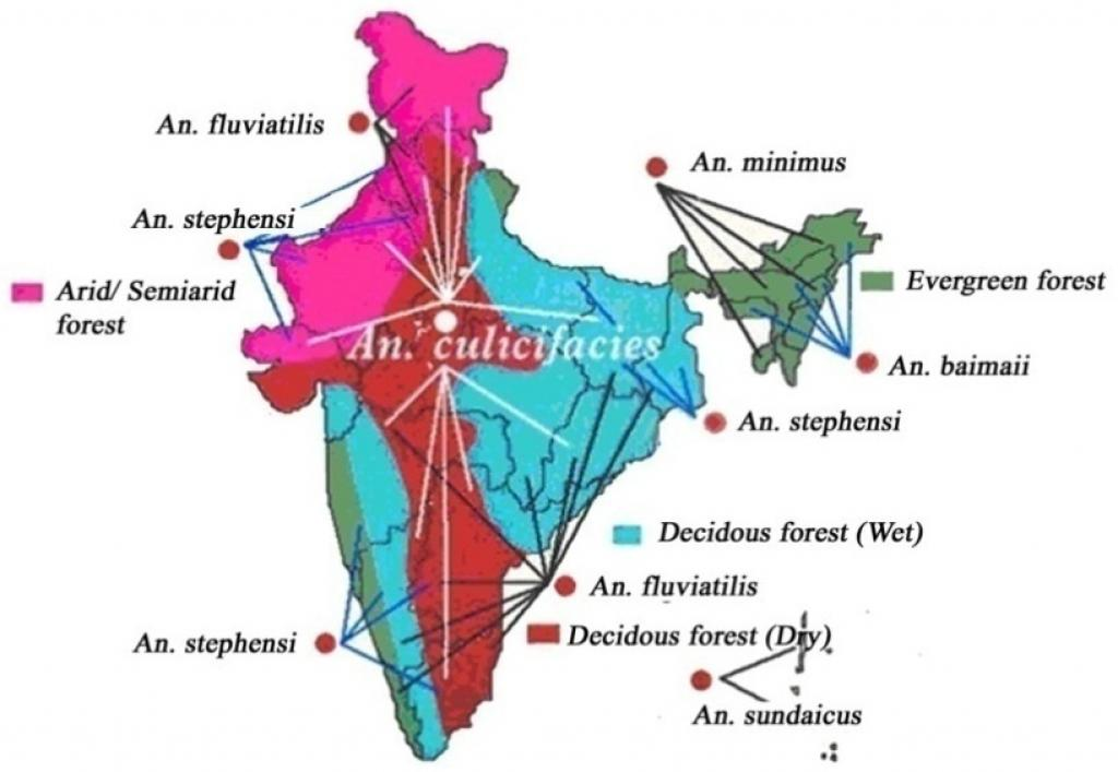 Anopheles culicifacies is the vector of rural malaria in India and generates about 65 per cent of cases annually. Credit: Vas Dev and Vinod P. Sharma