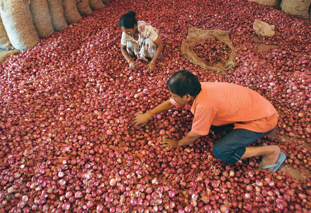 The tragedy with farmers is that they earn less as they grow more. Last year, farmers of Kurnool district in Andhra Pradesh were forced to sell onions for less than  Rs 1 per kg (Photo: Reuters)
