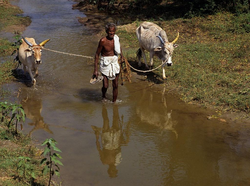 Apex court observed that any help to distressed farmers should not be compensatory but preventive in nature. Credit: Wikimedia commons