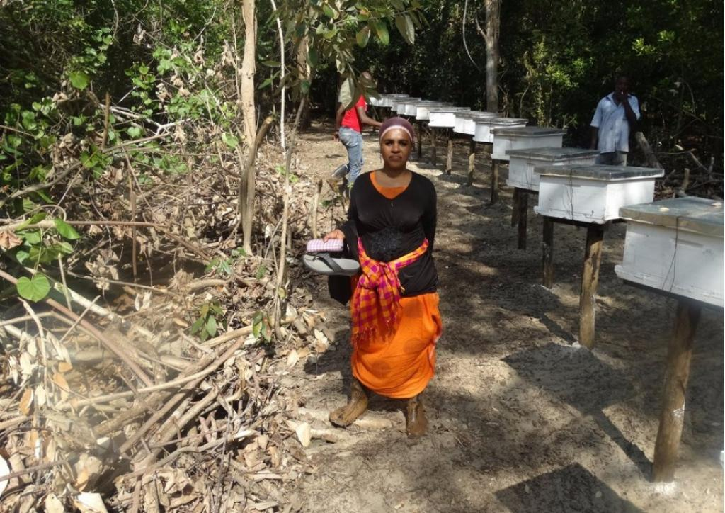 People in Kipini have found bee-keeping as an alternate livelihood option. Credit: Wetlands International