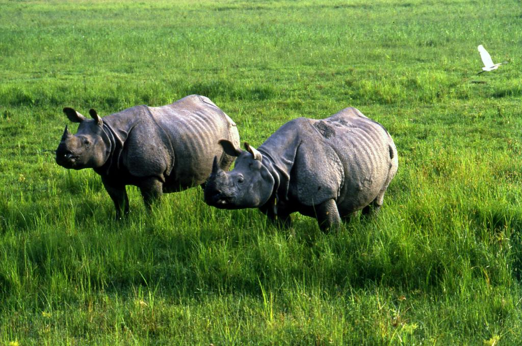 Kaziranga National Park, home to rhinos, is surrounded by over 100 villages. (Credit: Anil Agarwal/CSE)