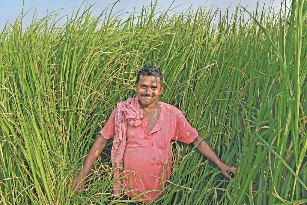 A farmer in Nadia displays his field where he has grown the rare kalabhat variety (Photo: Anupam Paul)
