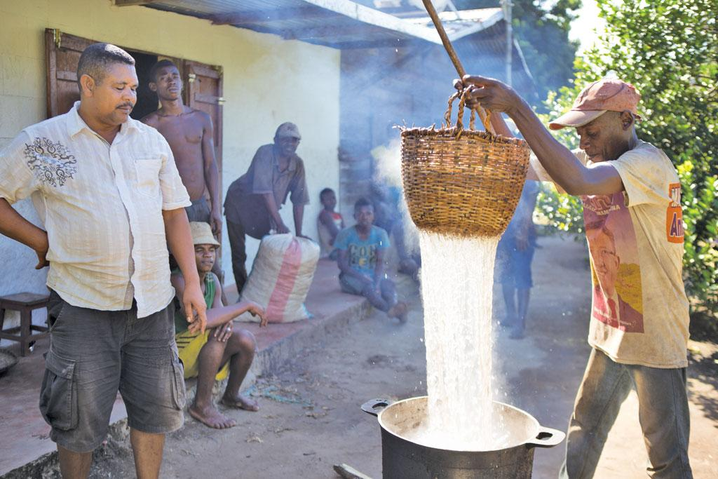 A farmer processes vanilla beans by boiling them at 65-80 degrees Celcius