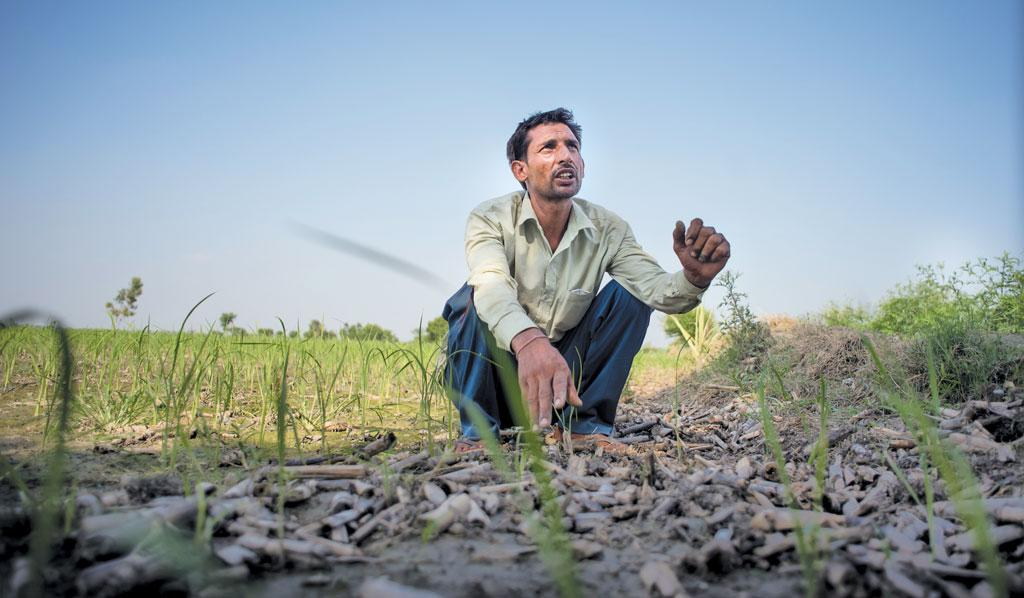 Sandeep Singh, whose farm in Haryana's Kohla village was identified for crop cutting experiments used for deciding the compensation for the village, says officials never visited his farm to conduct the experiment (Photographs: Adithyan PC)