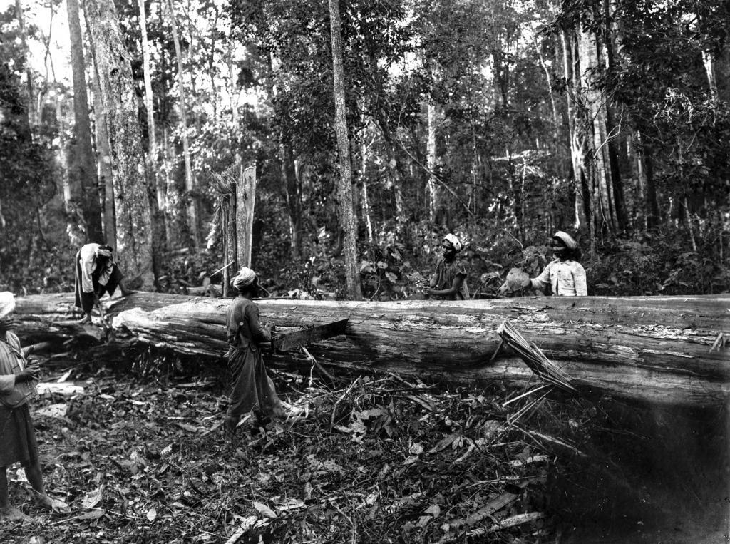 जंगल के दावेदार: बर्मा के जंगलों में पेड़ काटते स्थानीय लोग
