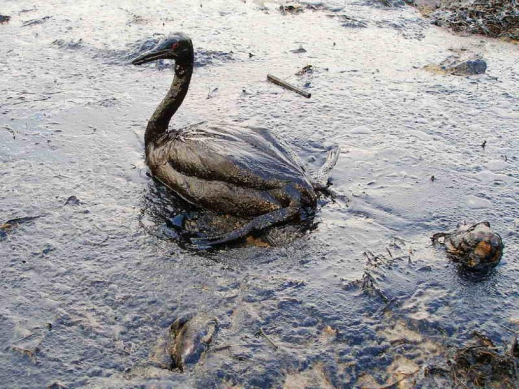 In addition to removing dyes and metals, nanomaterials can also be used to clean up oil spills. Credit: Wikimedia Commons