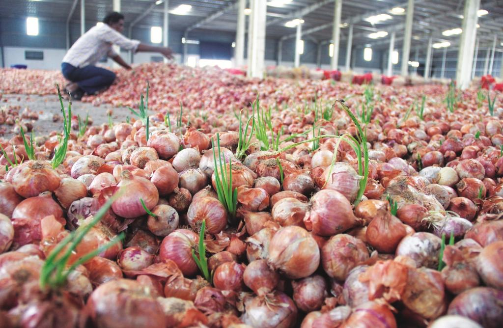 उत्पादन में थोड़ा वृद्धि होते ही किसान का प्याज कौड़ियों के भाव बिकने लगा था।